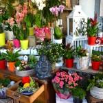 genay fleurs bouquets divers